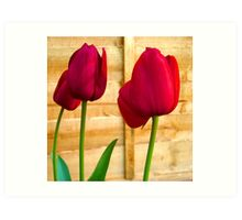 Red Tulips ..  Art Print