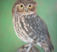 Little owl by Susie J