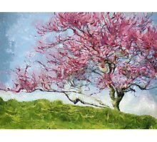 Pink Flowering Tree Photographic Print