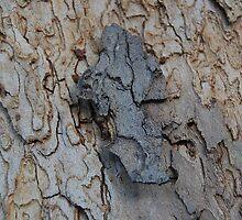 Bark 2 by HAStephens