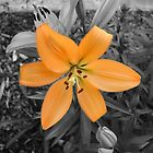 Orange Flower by Nathan Dooley