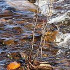 spring stream by delfinada