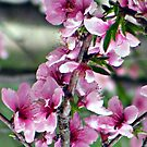 last peach blossom by rebecca smith