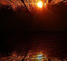 Christmas Morning Sunrise in East Texas by LorriCrossno