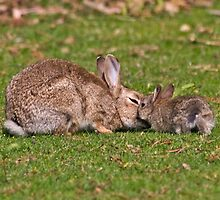 Bunny Love by Krys Bailey