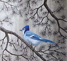 Blue Jay In Pines by Jack G Brauer