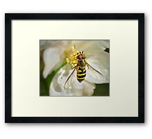 drinking nectar through a straw Framed Print