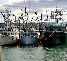 Fishing Fleet of Digby Nova Scotia, Canada by Larry Llewellyn