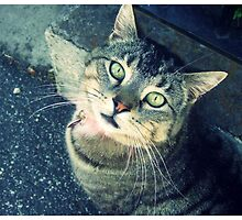 Kitty of the Streets by blackberrymoose