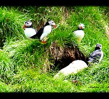 THE PUFFIN FAMILY by Madeline M  Allen