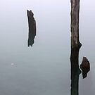 Old Piling Reflections 8 by marybedy