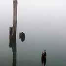 Old Piling Reflections 2 by marybedy