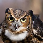 Great Horned Owl by John Wright