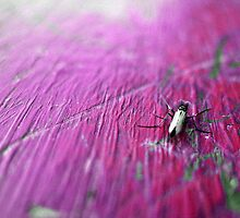 Fly on Pink Table by Tommy Seibold