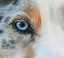 Australian Shepherd Blue Merle Eye by Lisa Anne McKee