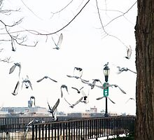 Seagulls at the East River by MissCellaneous