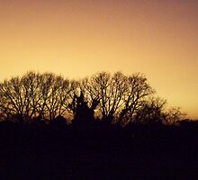 Sunset in the forest by KevCombes