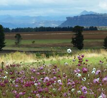 Cosmos View by Martie Venter