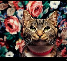 Posing Cat is Posing by Darrell Sharpe