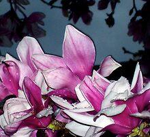 magnolia tree by melynda blosser