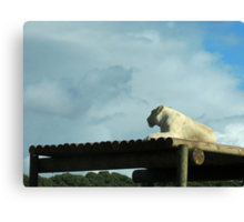 New Horizons: White Lioness Canvas Print