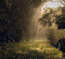 Misty morning by Rosalie Dale