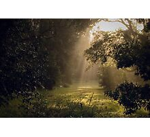 Misty morning Photographic Print