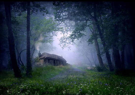 The Cottage in the Woods by Angie Latham