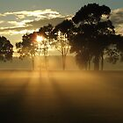 another misty mornin sunrise by SDJ1