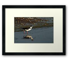 Black-Necked Stilt - Wetlands  Framed Print