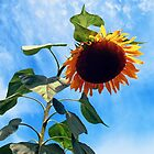 Sunflower and Sky by Susan Savad