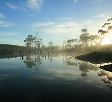 Forest morning in far nor west Tasmania , Australia by phillip wise