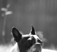 Quorra Shine  by NerdFox