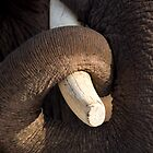 Tusk and Trunk by Steve Bulford