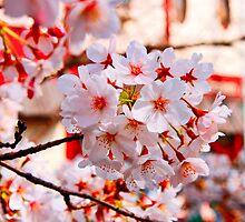 Blossom Bunch by Vittorio Zumpano