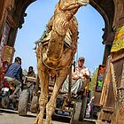 Camel coming through!!! by Heather Prince