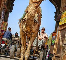 Camel coming through!!! by Heather Prince ( Hartkamp )