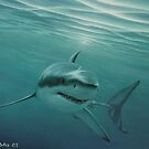 white shark by Angel Ortiz