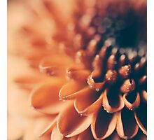 Sparkles Photographic Print