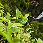 Devon Falls by Chaminda Subasinghe