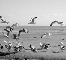 Worthing Birds by lukeiam
