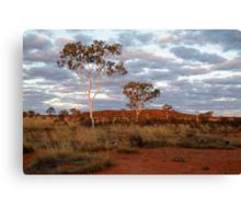 Sunset Ghost Gums,Batton Hill, North Simpson Desert Canvas Print
