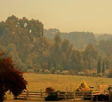 haze by Peta Hurley-Hill