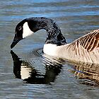 reflective goose by lisa1970