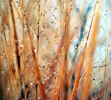 Winter tall grass by marycloch