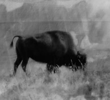 Bison On the Range by Vickie Emms
