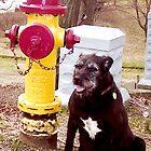 Mr. Pub & Fire Hydrant by CanvasMan