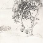 Moreton bay figs by Fiona O'Beirne