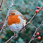 When the Red Red Robin by John Thurgood