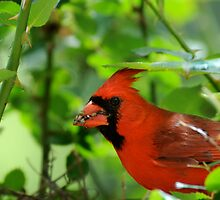 Father Cardinal does his part by Bonnie T.  Barry